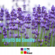 be smelly, fragrance, smell, aroma, wellbeing, sleep, lavender, the 52 project, 52 tips, neuroscience, community wellbeing project