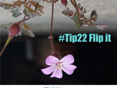 flip it, turn phone upside down, change of perspective, the 52 project, 52 tips, flip