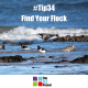 flock, find your flock, identify, the 52 project, Jen Smith, Iain Price, wellbeing